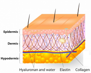 skin benes of human growth hormoneo